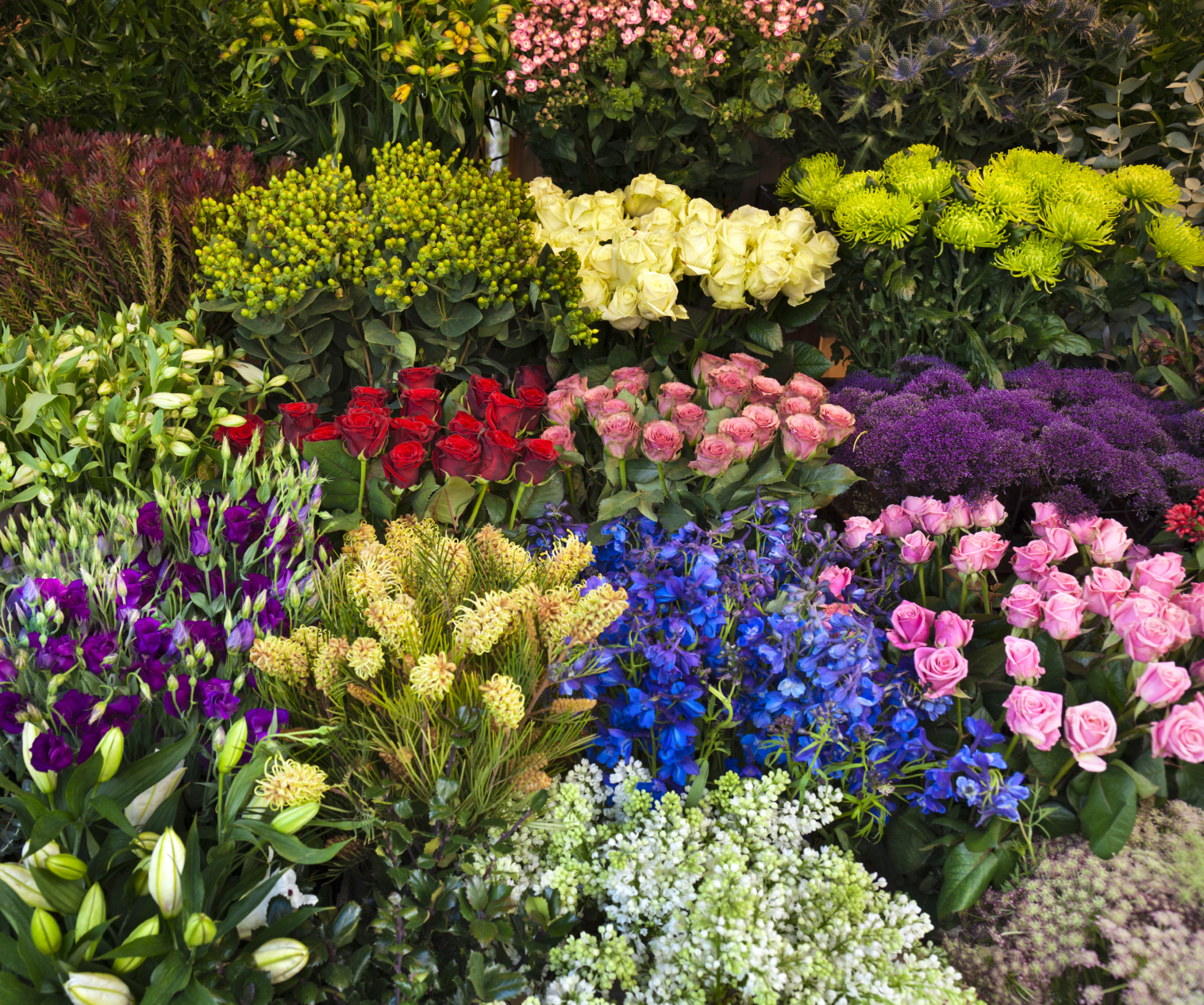 wholesale flowers and plants
